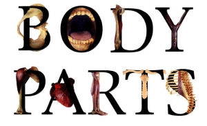 bodyparts-cropped2